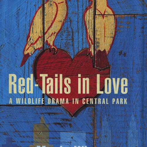 red tails in love
